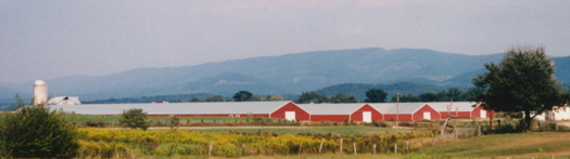 Biosecurity Basics for Poultry Growers | UGA Cooperative
