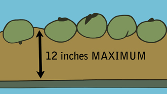Illustration showing tomatoes in 12 inches maximum from the bottom of a dump tank.