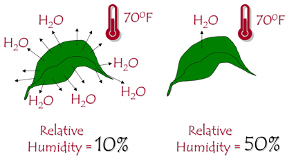 The lower the humidity, the more water is lost from a leaf.