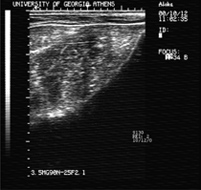 ultrasound image, rump fat