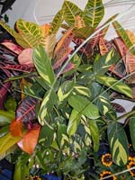 high-light adapted plants