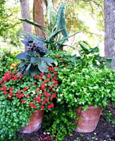 an arrangement of plants