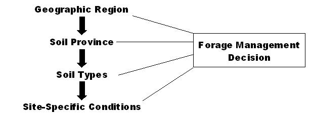 Forage Management Decision Flow Chart