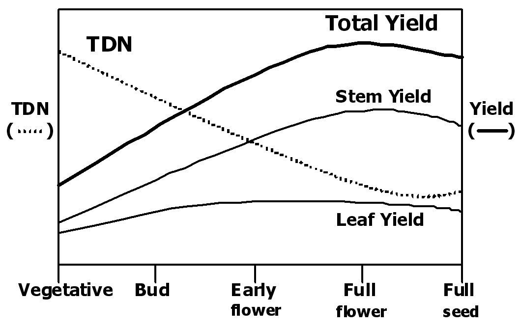 relative effect of advancing alfalfa maturity stages