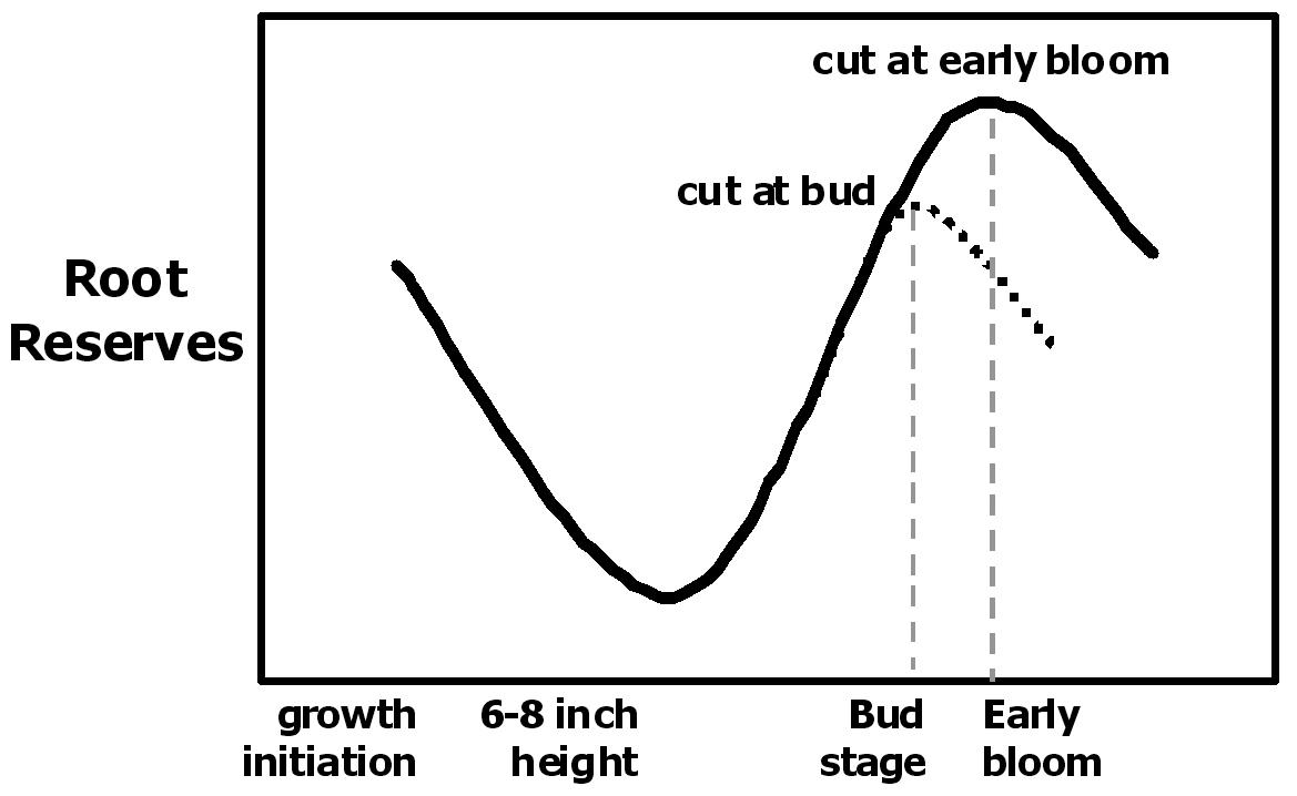 relative effect of advancing alfalfa maturity