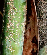 scale on bamboo