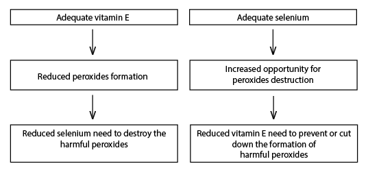 Figure 2. Interactive need of vitamin E and Se in animal and human diets.