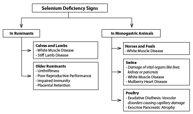 Figure 6. Selenium deficiency signs and symptoms in various animals.