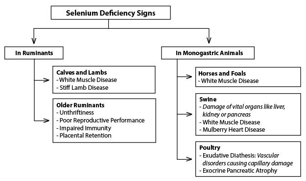 Figure 6. Selenium deficiency signs and symptoms in various animals.