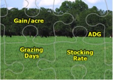 Figure 2. Gain/acre, average daily gain, the days in the grazing period, and stocking rate are interrelated and central to understanding how one forage system for stockering compares to another.
