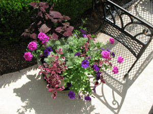 Figure 3. A container planting with various