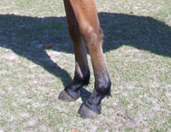 photo of horse pasterns with ideal angle.