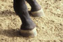 photo of a club foot on horse.