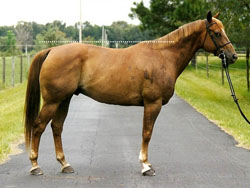 photo of a balanced horse with roughly equal hip and wither height.