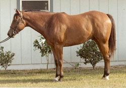 photo of horse that ties in high (shown by white arrow)