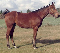 Figure 6c: horse that has a desirable 2:1 topline to underline ratio of the horse?s neck.