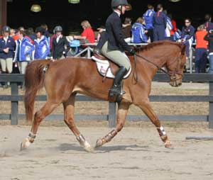 photo of a rider on a horse with little knee action and a long stride length.