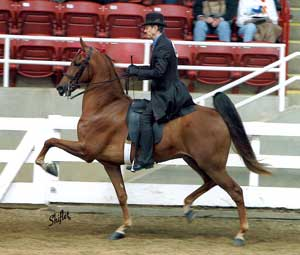 photo of a rider on a horse with a greater degree of knee action.