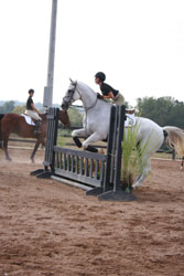 Figure 8: A horse that is too close to