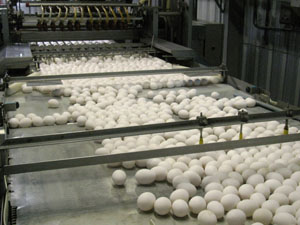 Figure 1. A portion of the 900,000 eggs