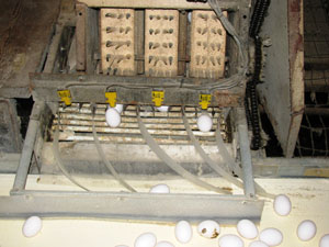 Figure 4. Minimizing egg breakage