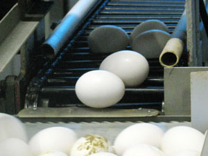 Figure 5. Any place where eggs transition