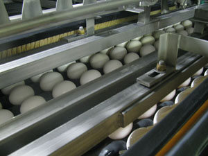 Figure 6. Taking the time to observe