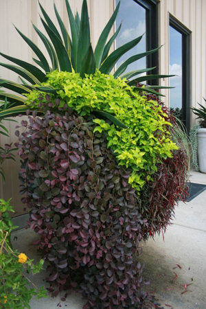 Figure 6. In addition to a textural