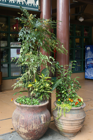 Figure 8. In these two mixed planters,
