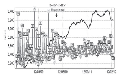 Figure 5. Abortion rates before and after use of a BHV-1 MLV on a large dairy operation (>5,000 head) that was discontinued in September 2009 (as indicated by vertical arrow). The product was used according to label directions. Numbers in squared boxes are actual abortions by week. The farm noticed a large decline in abortion rates despite herd growth, as indicated by the solid upward trend line.
