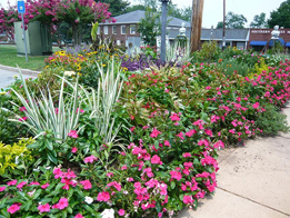 """Figure 14. This mixed annual and perennial bed may appear too """"busy? but the goal was to have customers spend more time in the adjoining retail area."""