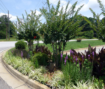 Mixed bed with variegated Liriope, Canna and Liatris.