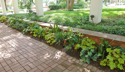 A mixed-shade bed with two varieties of Heucheras -- lenten rose and cast iron plant ? combines a good use of evergreen foliage and foliar textures.