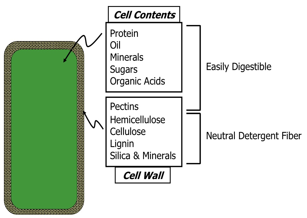 Figure 4. The easily digestible components of a cell and the fibrous
