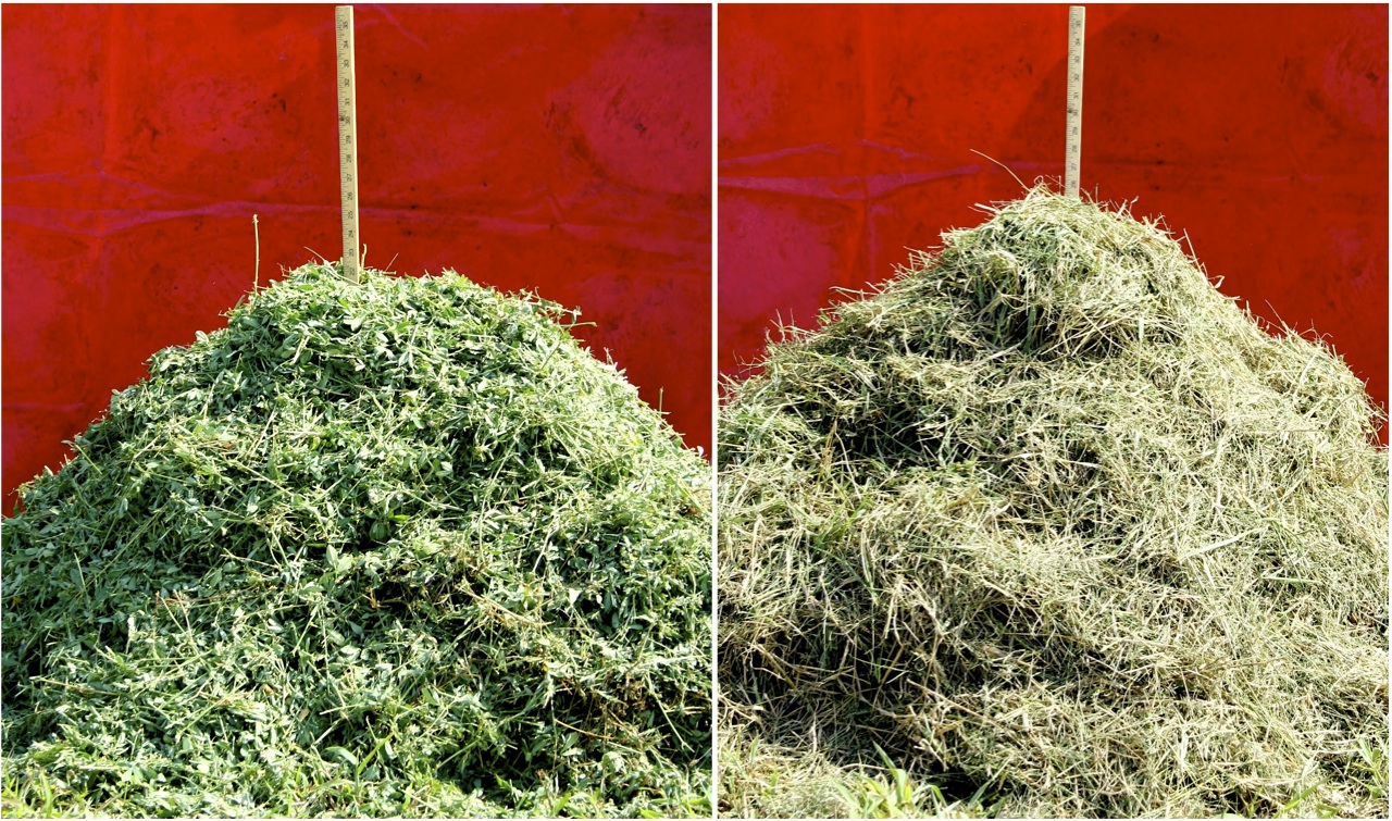 Figure 7. A 25-lb pile of alfalfa (L) and bermuda-grass (R) that had