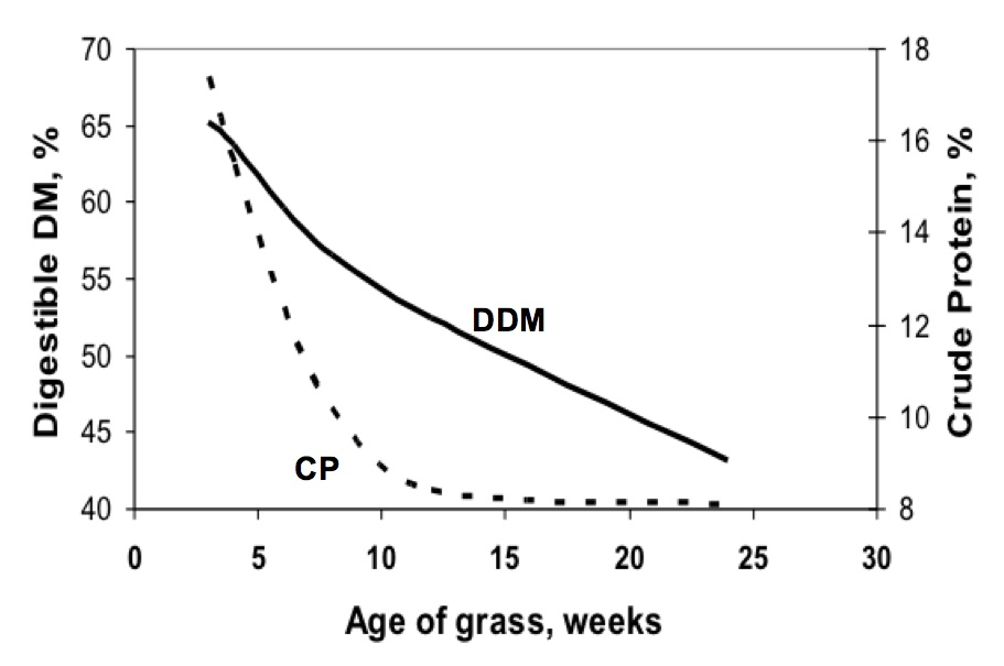 Figure 8. The digestible dry matter (DDM) and crude protein (CP) of
