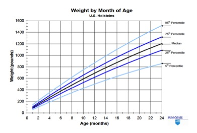 Figure 1. Comparison of weight by age with industry percentiles for Holstein heifers (Source: Penn State).