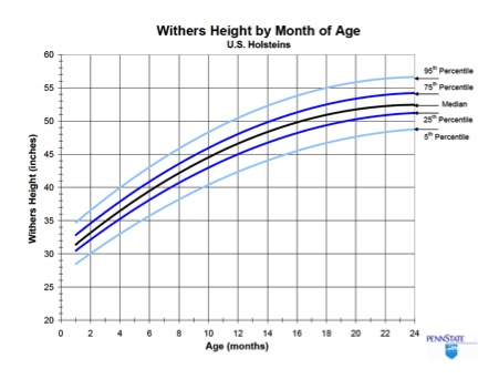 Figure 2. Comparison of wither height by age with industry percentiles for Holstein heifers (Source: Penn State).