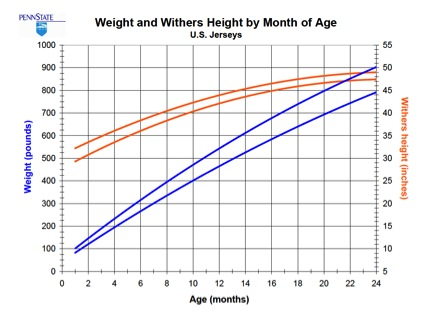 Figure 3. A combined graph of heifer weight and height by age for Jersey heifers (Source: Penn State).