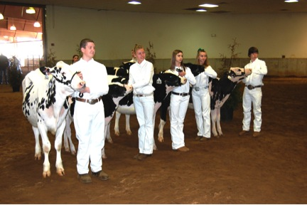Figure 9. Example of heifers lined up side by side and equally spaced.