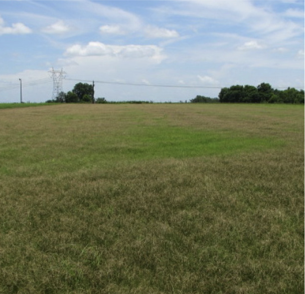 Field of bermudagrass