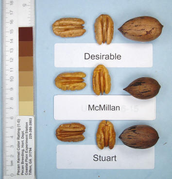 Photo of a desirable pecan, a McMillan pecan, and a Stuart pecan