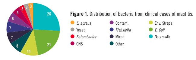 Piechart showing the disctribution of baceria from clincal cases of mastitis