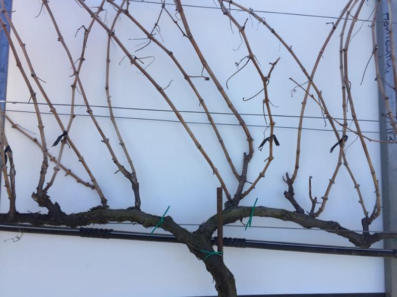 Pre-spur pruning