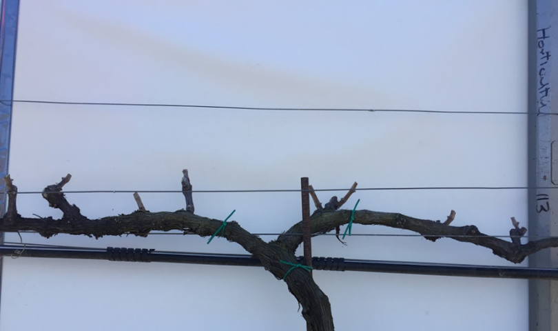 Post-spur pruning