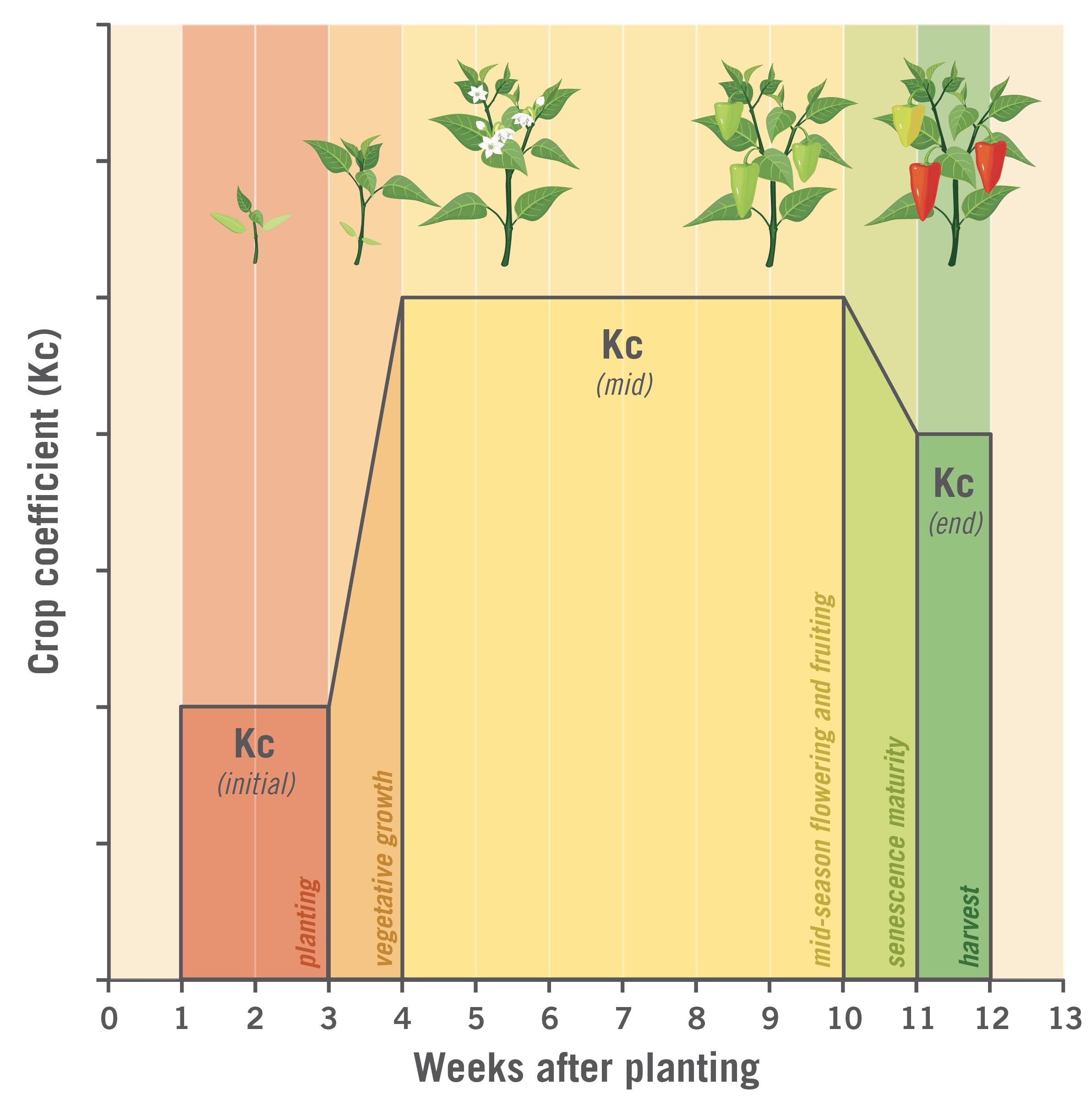 Graph of variation throughout crop development