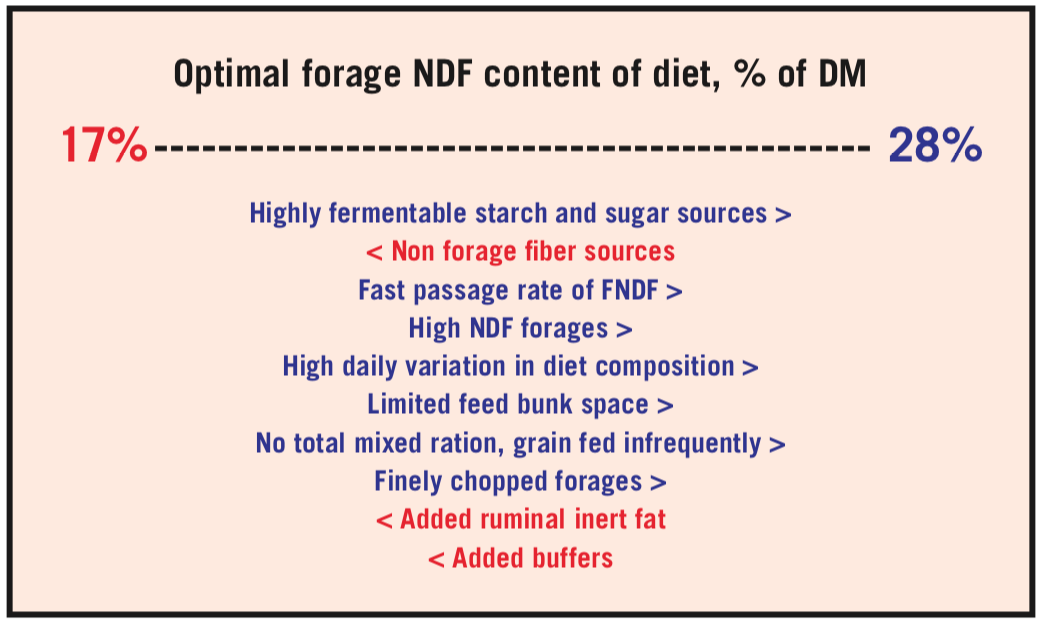 Factors to consider when optimizing forage NDF in the diet