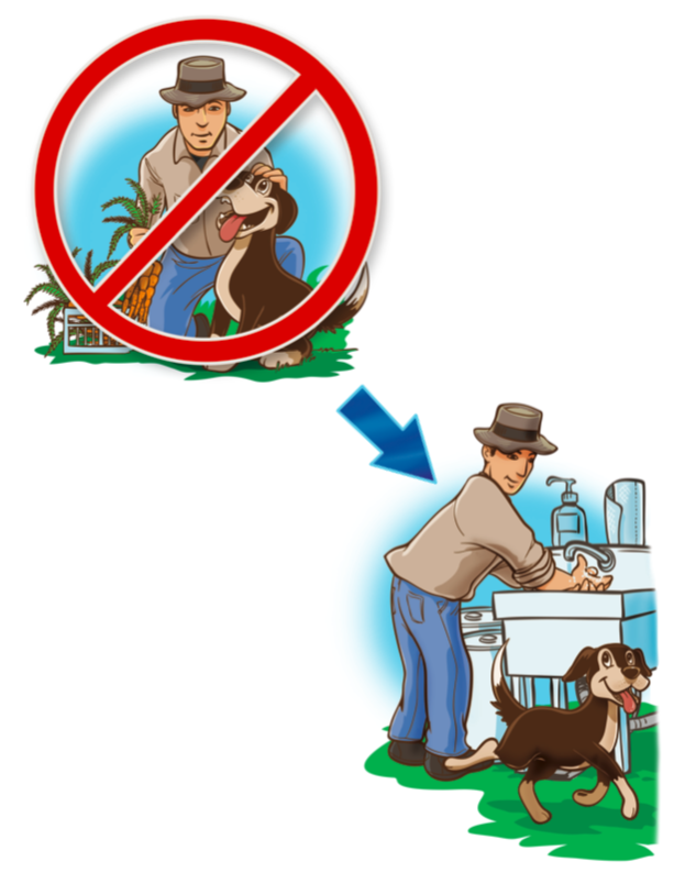 Drawing showing man petting a dog in the field with a big red 'No' sign over it next to a drawing of the man washinf his hands