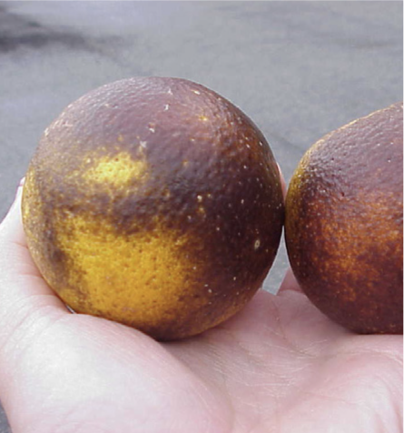 Damage to fruit in November