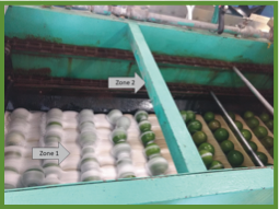 Conveyor belt rolling produce